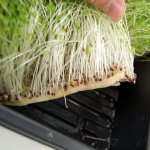 grow mat, ültető párna