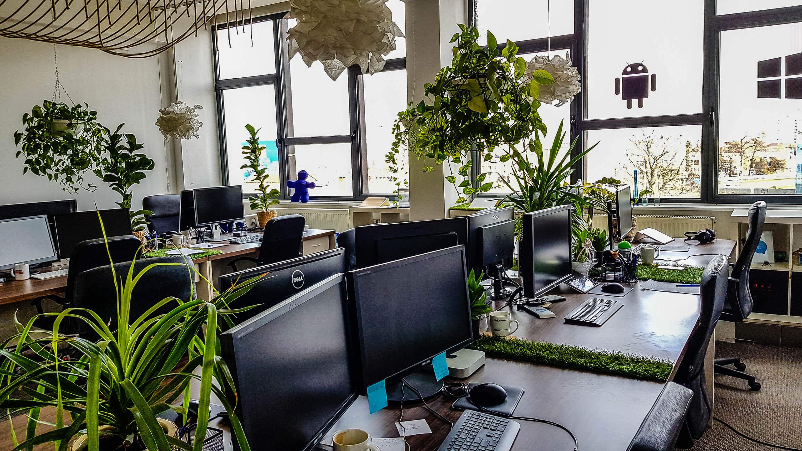 növényápolás, növénygondozás, irodai növények